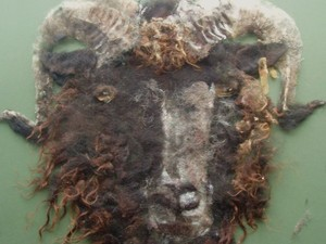 Integrated sheep using painted wool