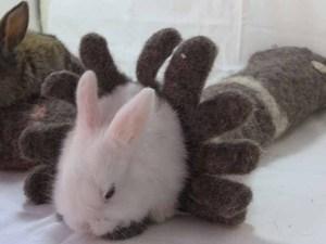 Bunnies & Bowls
