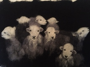 A Different Group Of Sheep Created By Blending Merino Wool