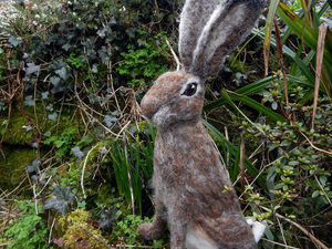 Hare sat in garden