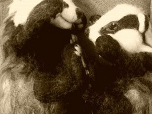 Badgers playing on the sofa