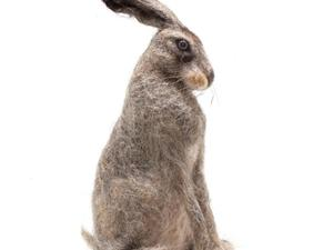 Grey felted hare standing proudly
