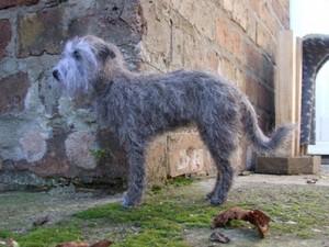 Grey dog in garden created using felt