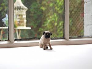Felted pug sitting by window