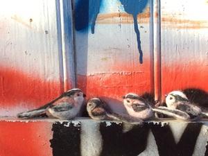 Felted birds tweeting on ledge